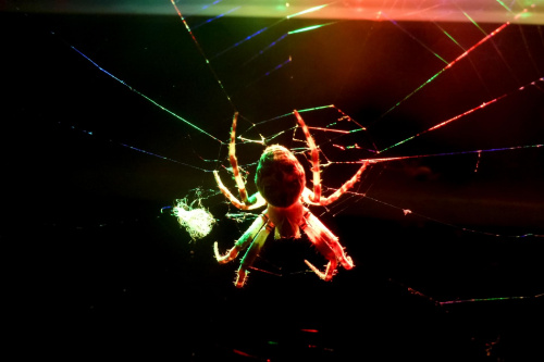 #pająki