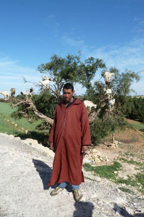 Etap produkcji olejku arganowego #Maroko #zwierzęta #ludzie