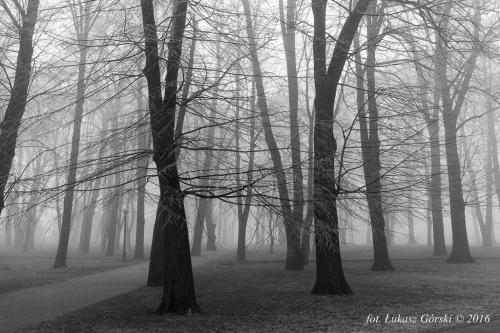 Miasto mgieł #mgła #Chojnice #mgliste #park #drzewa