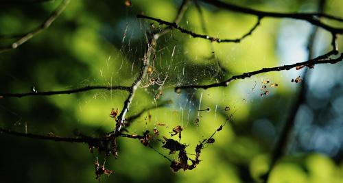 W pajęczynie światła