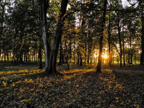 Mój ukochany park z wieczorka..